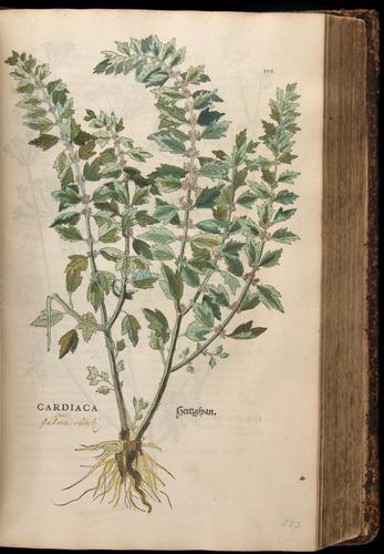 Image of Fuchs-1542-395