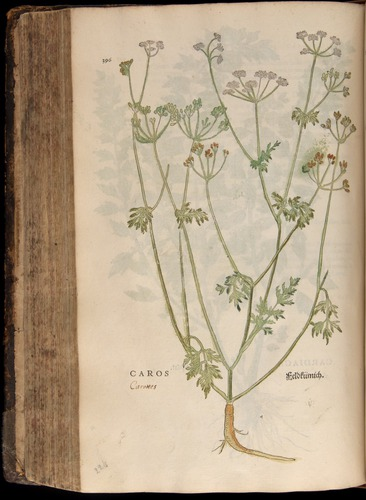 Image of Fuchs-1542-396