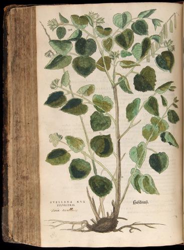 Image of Fuchs-1542-398