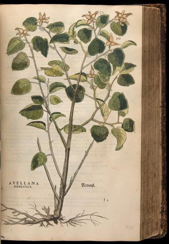 Image of Fuchs-1542-399
