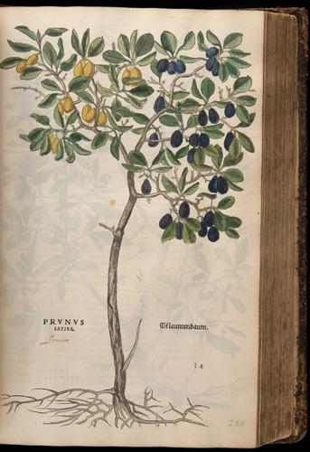 Image of Fuchs-1542-403