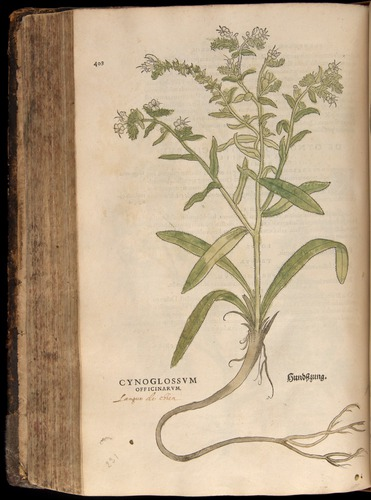 Image of Fuchs-1542-408