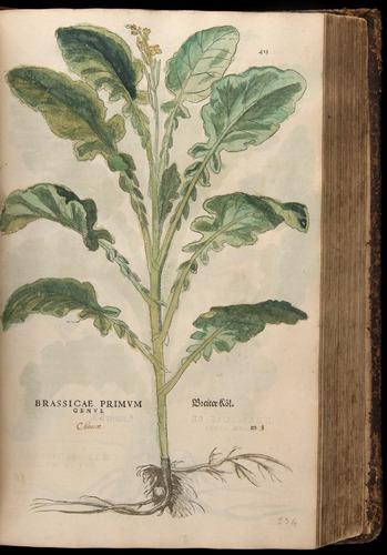 Image of Fuchs-1542-413