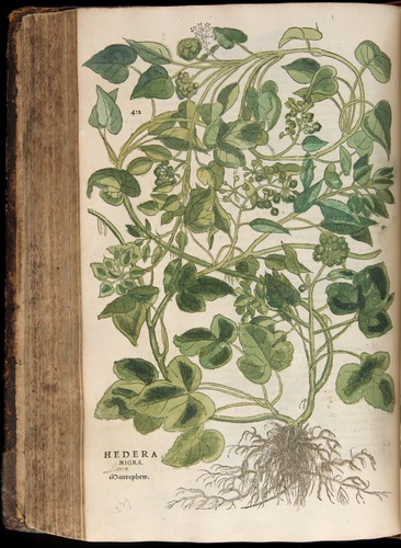 Image of Fuchs-1542-422