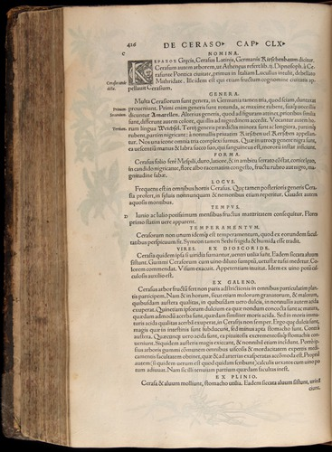 Image of Fuchs-1542-426