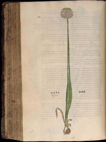 Image of Fuchs-1542-430