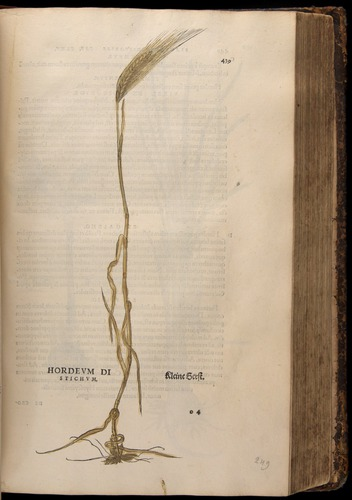 Image of Fuchs-1542-439