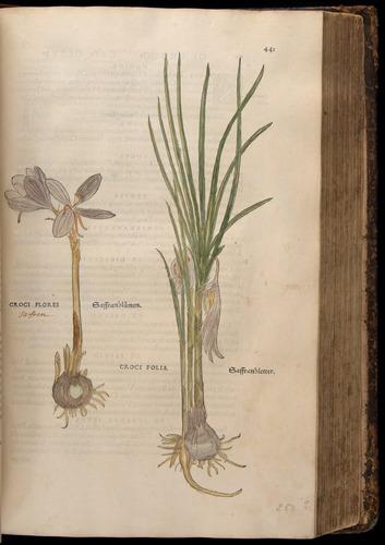 Image of Fuchs-1542-441