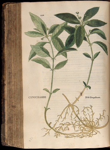 Image of Fuchs-1542-444