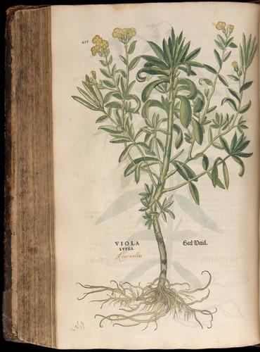 Image of Fuchs-1542-458