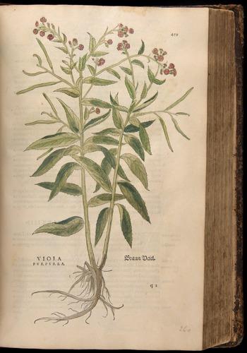Image of Fuchs-1542-459