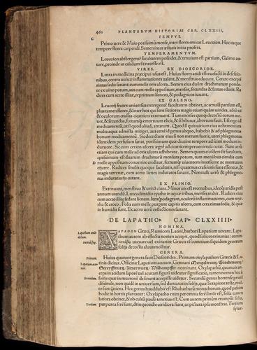 Image of Fuchs-1542-460