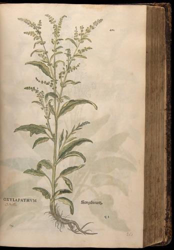 Image of Fuchs-1542-461