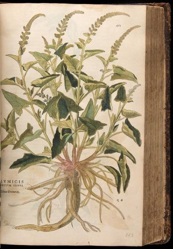 Image of Fuchs-1542-463