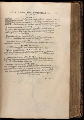 Image of Fuchs-1542-477