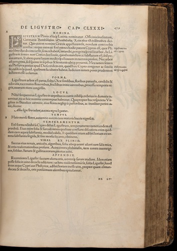Image of Fuchs-1542-479