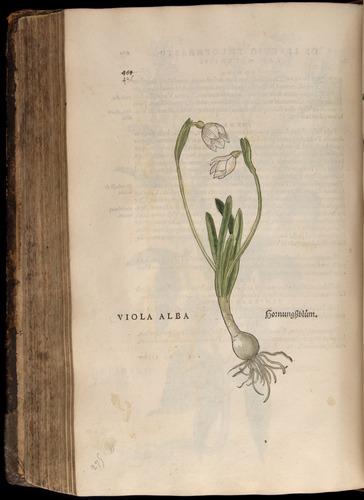Image of Fuchs-1542-486