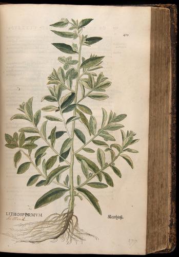 Image of Fuchs-1542-489