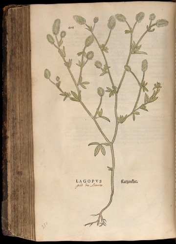 Image of Fuchs-1542-494