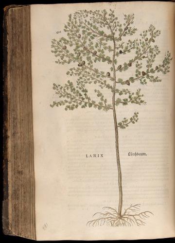 Image of Fuchs-1542-496