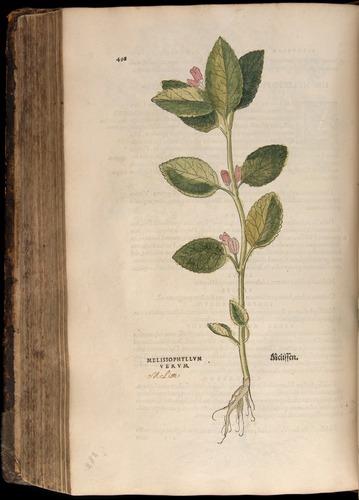 Image of Fuchs-1542-498