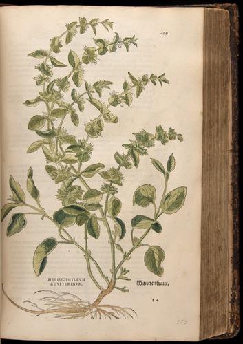 Image of Fuchs-1542-499