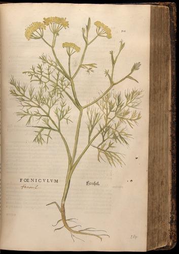 Image of Fuchs-1542-501