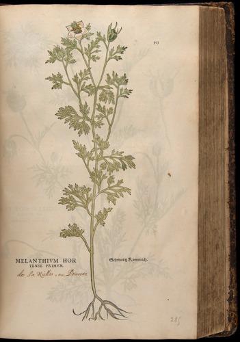 Image of Fuchs-1542-503