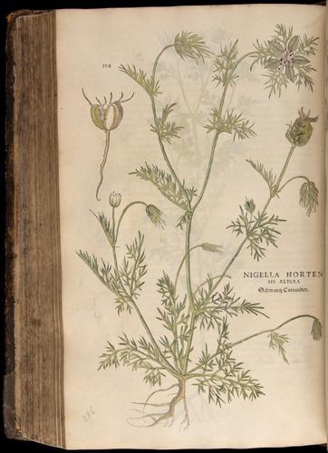 Image of Fuchs-1542-504
