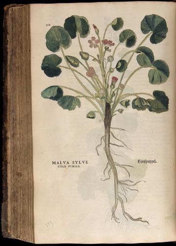 Image of Fuchs-1542-508