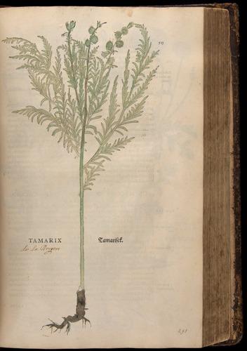 Image of Fuchs-1542-513
