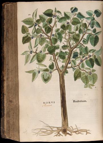 Image of Fuchs-1542-522