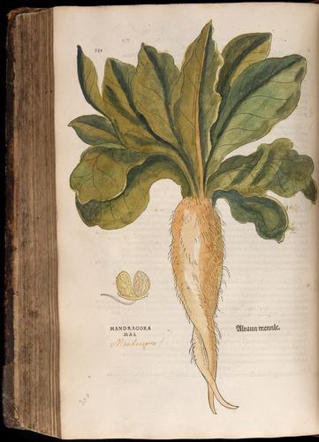 Image of Fuchs-1542-530