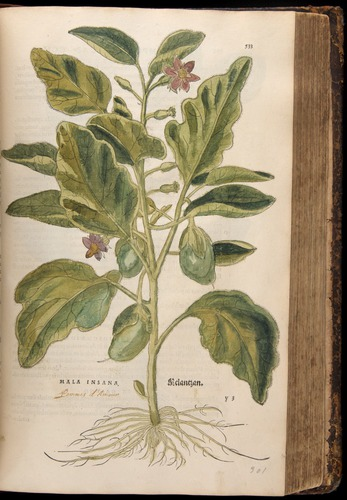 Image of Fuchs-1542-533