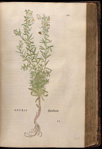 Image of Fuchs-1542-545