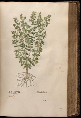 Image of Fuchs-1542-547