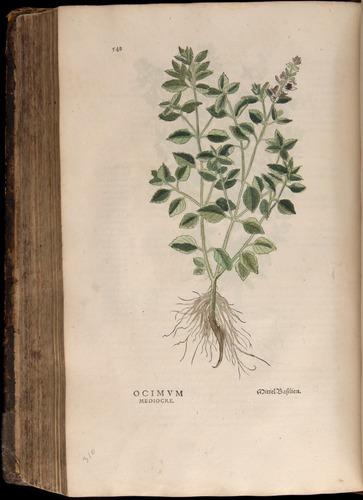 Image of Fuchs-1542-548