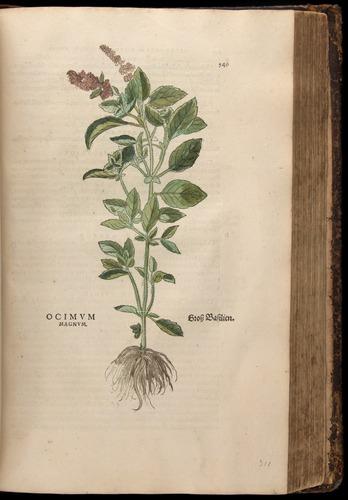 Image of Fuchs-1542-549