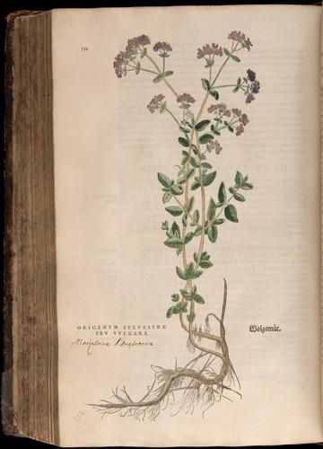 Image of Fuchs-1542-552