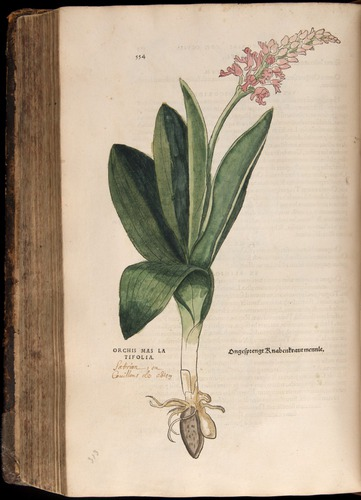 Image of Fuchs-1542-554