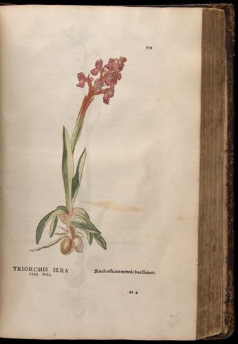 Image of Fuchs-1542-559