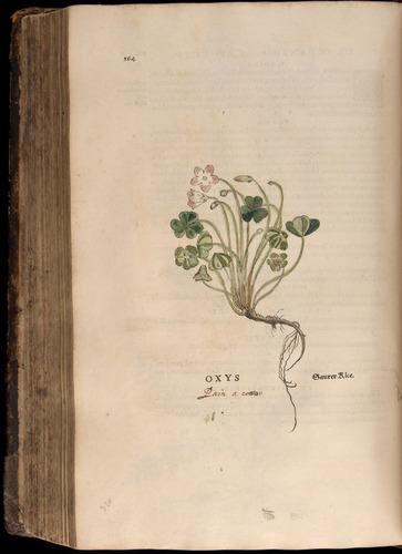 Image of Fuchs-1542-564