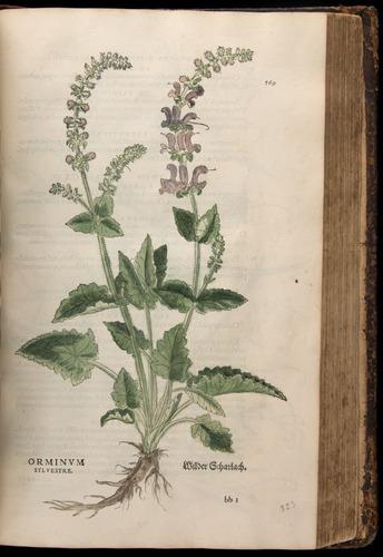 Image of Fuchs-1542-569