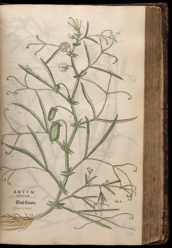 Image of Fuchs-1542-571