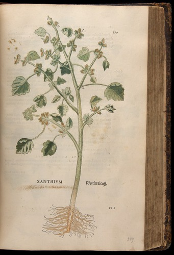 Image of Fuchs-1542-579