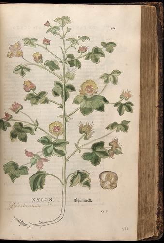 Image of Fuchs-1542-581