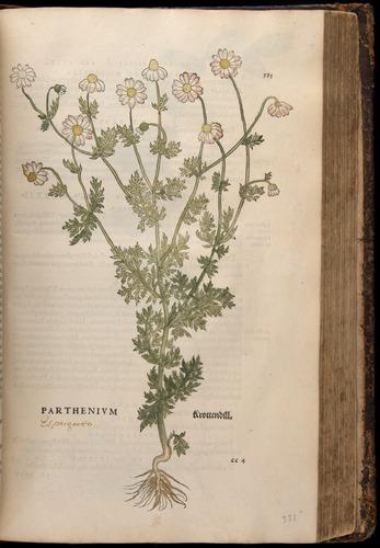 Image of Fuchs-1542-583