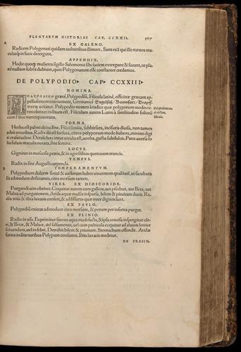 Image of Fuchs-1542-587