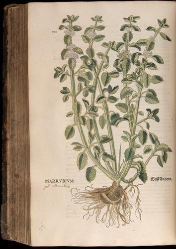 Image of Fuchs-1542-590