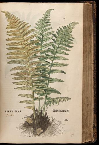 Image of Fuchs-1542-595